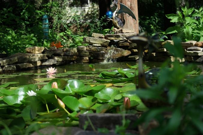 Pond shot